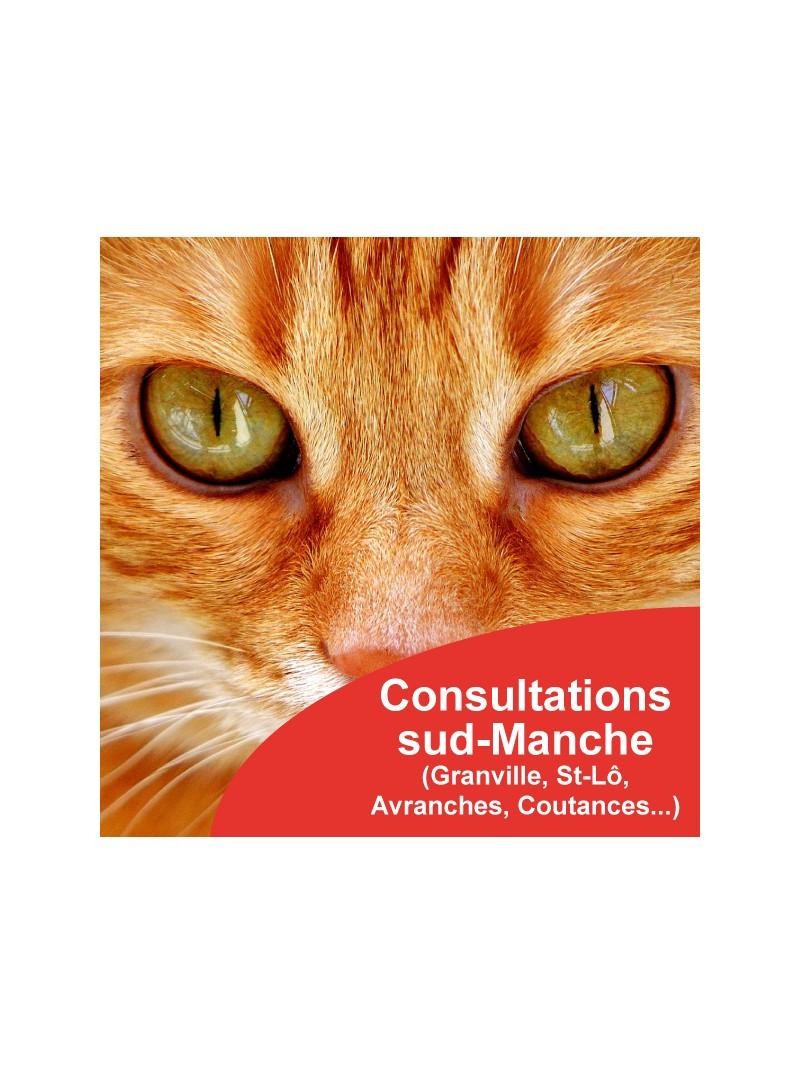 Consultations comportementaliste félin sud Manche Granville Coutances Avranches Saint-Lô Vire