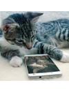Consultation comportementaliste chat par téléphone France et autres pays langue française