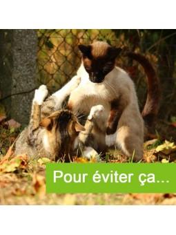 Solution bonne cohabitation 2 chats - éviter bagarre