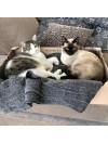 Solution bonne cohabitation 2 chats : vie en harmonie
