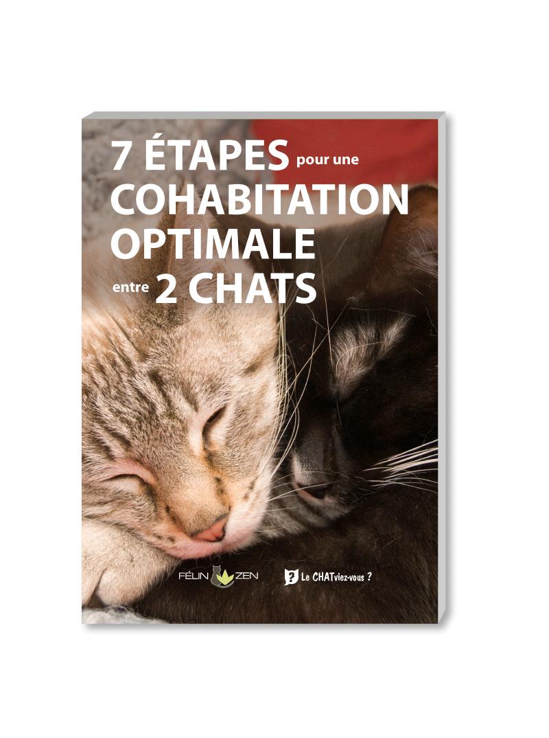 Solution bonne cohabitation 2 chats