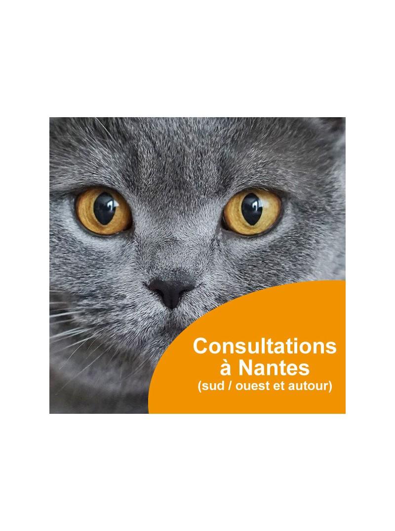 Consultations comportementaliste félin à Nantes sud et ouest et autour