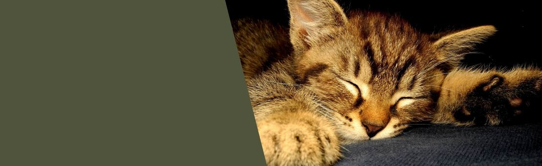 Accompagnement par une comportementaliste spécialiste du chat